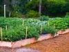 Seeds of Love Community Garden