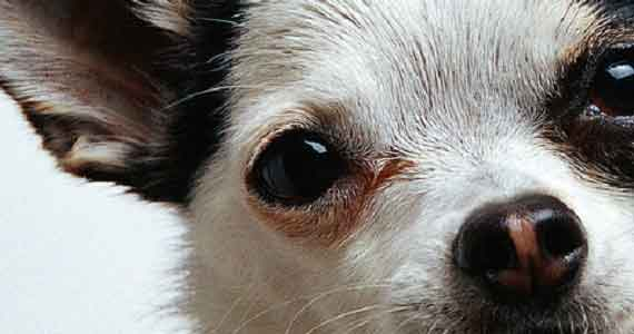 Dog in closeup